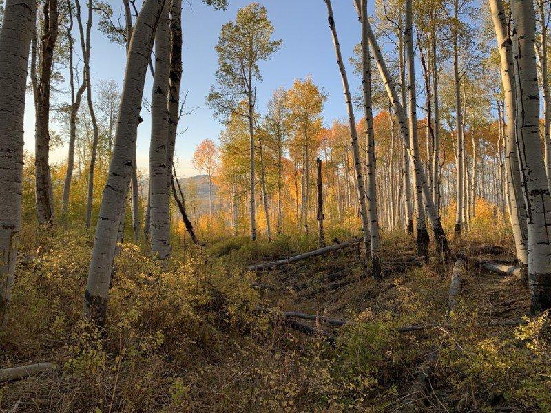 Gunnison_National_Forest's_Pilot_Knob_roadless_area_by_Peter_Hart_Wilderness_Workshop_FPWC-scr.jpg