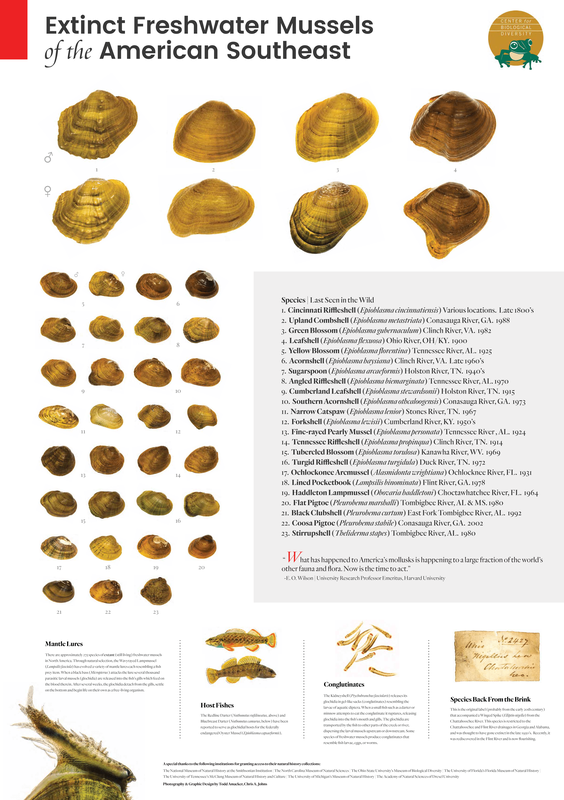 RSExtinct-Mussels-of-the-American-Southeast_TACV_Center_FPWC.png