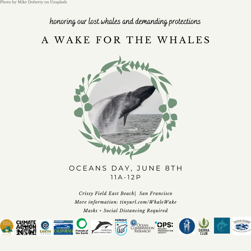 Wake for the Whales (1).png