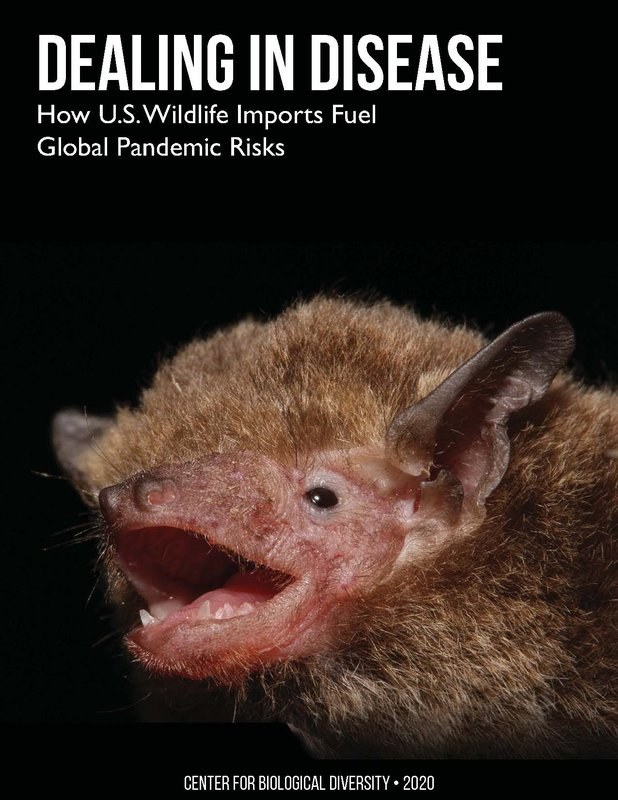Wildlife report cover.jpg