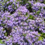 5/23/2009 Arboretum Flowers (13)