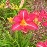 5/23/2009 Arboretum Flowers (8)