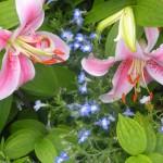 5/23/2009 Arboretum Flowers (6)