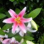 5/23/2009 Arboretum Flowers (3)