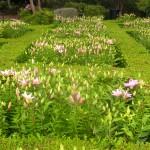 5/23/2009 Arboretum Flowers (2)
