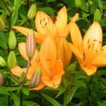 5/23/2009 Arboretum Flowers (1)