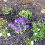 4/1/2010 Yard Scenes (13)