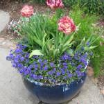 4/10/2010 Dallas Blooms (82)