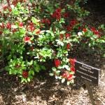 4/10/2010 Dallas Blooms (81)