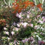 4/10/2010 Dallas Blooms (69)