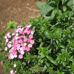 4/10/2010 Dallas Blooms (60)
