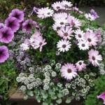 4/10/2010 Dallas Blooms (51)