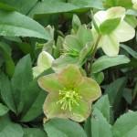 4/10/2010 Dallas Blooms (48)