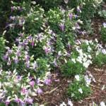 4/10/2010 Dallas Blooms (44)
