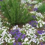 4/10/2010 Dallas Blooms (40)