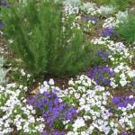 4/10/2010 Dallas Blooms (39)