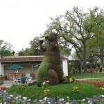 4/10/2010 Dallas Blooms (35)