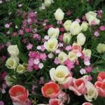 4/10/2010 Dallas Blooms (31)