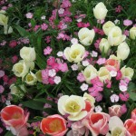 4/10/2010 Dallas Blooms (30)