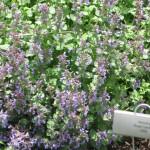 4/10/2010 Dallas Blooms (6)