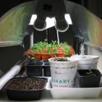 4/17/2010 Seed Starter Kit (3)