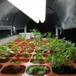 4/17/2010 Seed Starter Kit (2)