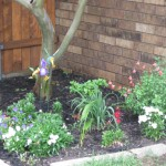 5/14/2010 Spring Flower Beds (44)