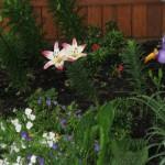 5/14/2010 Spring Flower Beds (37)