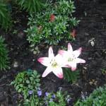 5/14/2010 Spring Flower Beds (35)