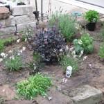 5/14/2010 Spring Flower Beds (22)