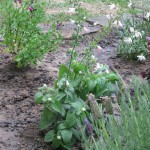 5/14/2010 Spring Flower Beds (9)