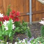 6/3/2010 June Colors (12)