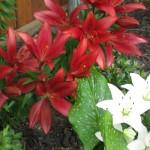 6/3/2010 June Colors (11)