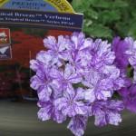 6/17/2010 Purple Garden (2)