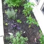 9/28/2010 September garden (7)