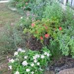 9/28/2010 September garden (16)