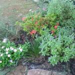 9/28/2010 September garden (17)