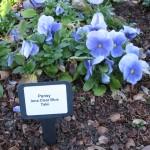12/31/2010 Winter Arboretum (3)