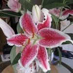 2/21/2011 Stargazer Bouquet for Valentine's Day 1