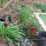 3/22/2011 Spring Garden Plans (8)