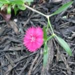 4/7/2011 Spring Blooms part 1 (18)