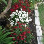 4/7/2011 Spring Blooms part 1 (12)