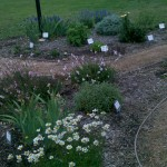 4/24/2011 Coppell Community Gardens (2)