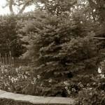 4/30/2011 Grapevine Heritage Park Botanical Gardens (1)