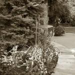4/30/2011 Grapevine Heritage Park Botanical Gardens (3)