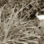 4/30/2011 Grapevine Heritage Park Botanical Gardens (5)