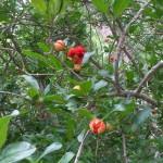 4/30/2011 Grapevine Heritage Park Botanical Gardens (8)