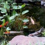 4/30/2011 Grapevine Heritage Park Botanical Gardens (11)