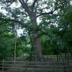 4/30/2011 Grapevine Heritage Park Botanical Gardens (13)