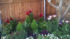 5/13/2011 Lilies!